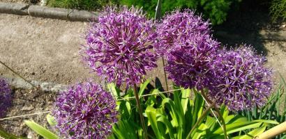 visita-guidata-orto-botanico